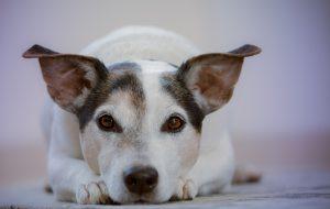 adorable-animal-animal-photography-612813