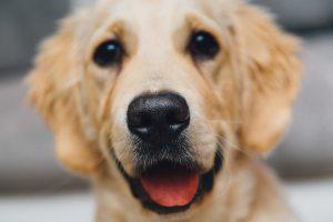animal-dog-focus-7720 (1)