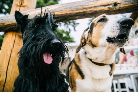 animals-blur-canine-800406